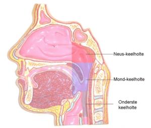 nasaliteit